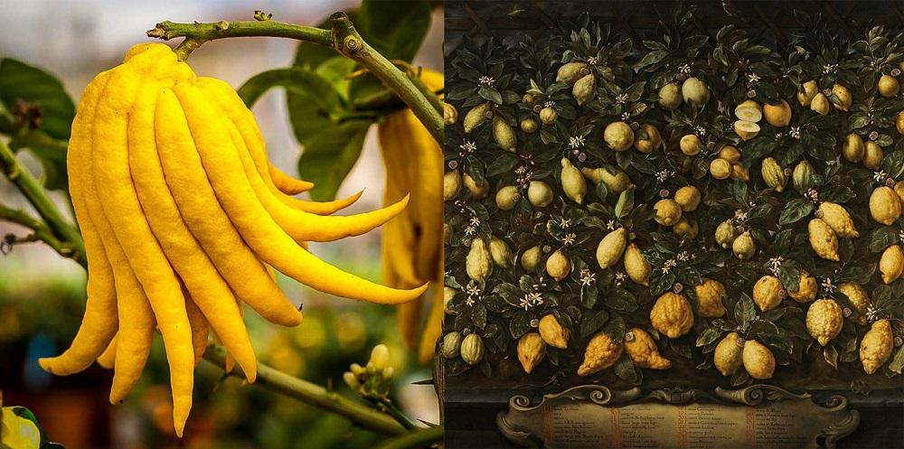 Zitronenvielfalt