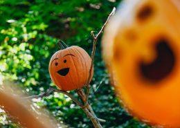 Herbst ist Kürbiszeit